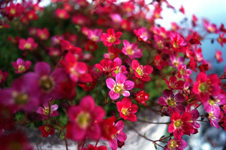 Små blommor. Foto: Anneli Uusitalo Vackert.Nu