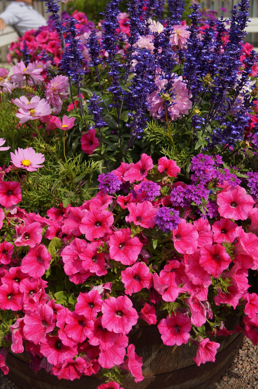 Blommor Foto: Anneli Uusitalo Vackert.Nu