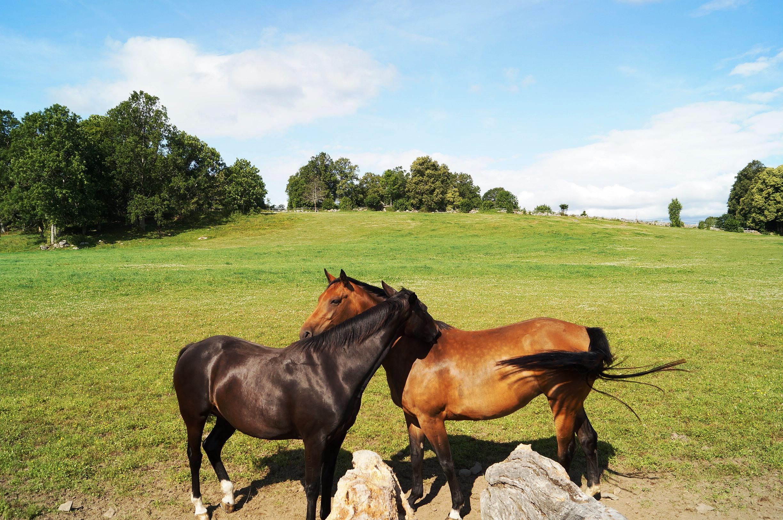 Vår bekants vackra hästar. Foto: Anneli Uusitalo Vackert.Nu