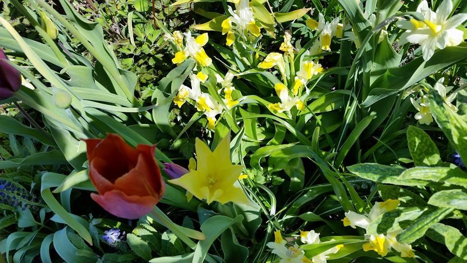 Det blommar i Rosendals Trädgård! Foto: Inger Bjelke